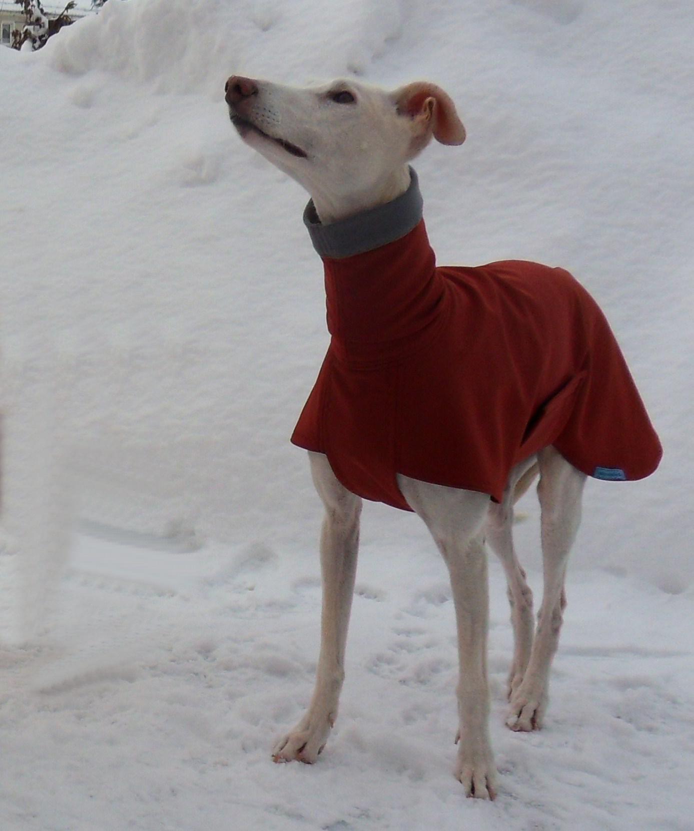 Hundemäntel für den Galgo   günstig und gut - Galgofreunde ...